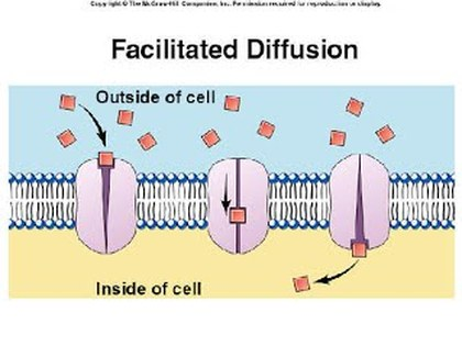 Facilitated Diffusion Welcome To Biology